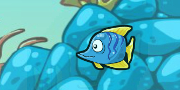 Fish Race Champions game